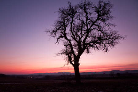far off: Single tree after sunset with violet skies, Pfalz, Germany Stock Photo