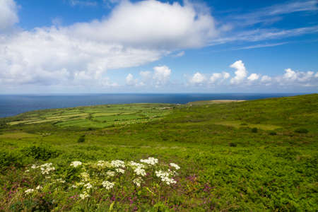 yarrow: Cornish coast between Lands End and St  Ives, Cornwall, England Stock Photo
