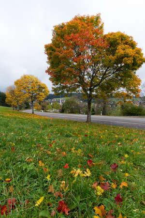 Colorful Ahorn-Bäume im Herbst Zeit in Schwarzwald, Deutschland