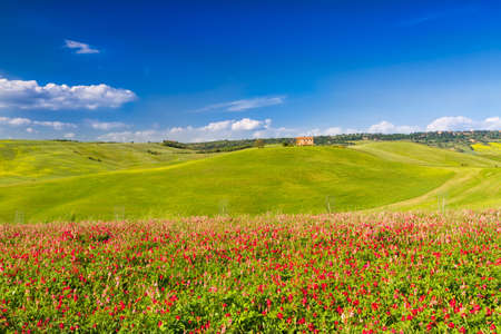 val dorcia: Tuscany landscape in Val dOrcia with flowers, Pienza, Italy