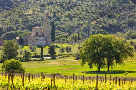 sant'antimo: Abbey of SantAntimo with vineyards, Montalcino, Tuscany, Italy