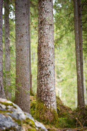 berchtesgaden: Trees at Lake Hintersee, Berchtesgaden, Germany Stock Photo