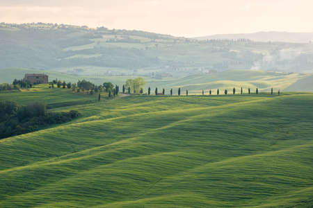 Farmhouse with cypess alley and fields, Tuscany, Italy Stock Photo