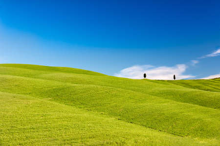 Rolling hills with trees and blue skies, Tuscany, Italy photo