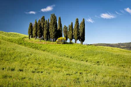 toskana: Cypress on hills, Tuscany, Italy