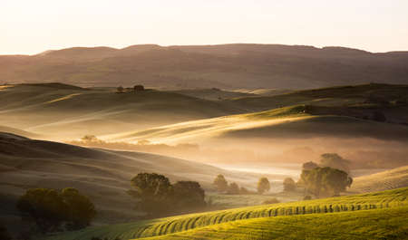 cropland: Dawn in Tuscany, Val d