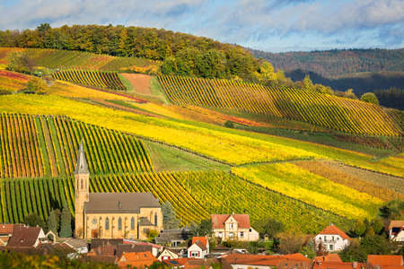 cropland: Vineyards with autumn colors, Pfalz, Germany
