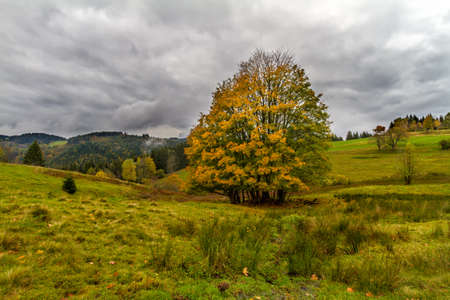 far off: Tree at autumn in Black Forest, Germany