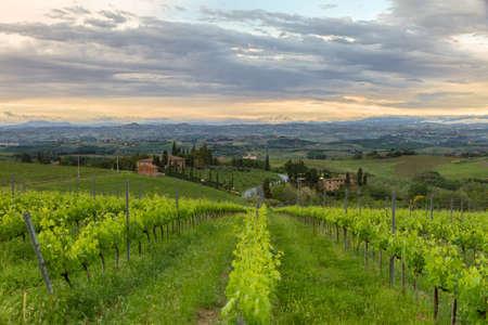 Vineyards in Tuscany at dusk, Italy photo
