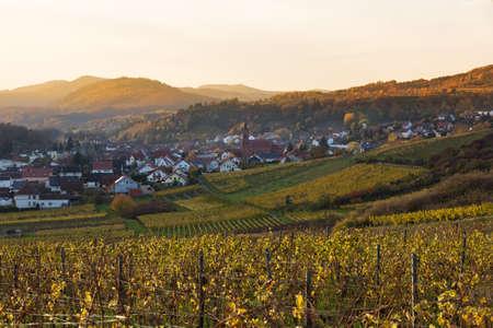 Vineyards in Pfalz at sunset, Germany Stock Photo