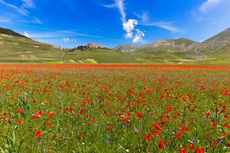 castelluccio: Blooming poppies and lentils at Piano Grande, Castelluccio, Italy Stock Photo