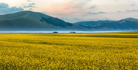 rappi: Blooming rapeseed at Piano Grande, Umbria, Italy Stock Photo