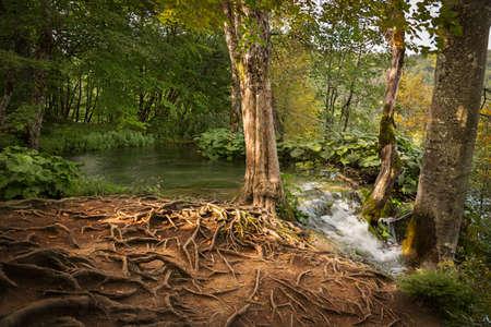 plitvice: Forest in Plitvice Lakes National Park, Croatia