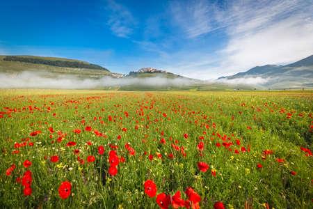 champ de fleurs: Fioritura au Piano Grande dans le brouillard du matin, Ombrie, Italie