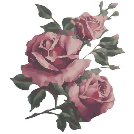 nature one painted: Watercolor hand drawn vector rose Illustration