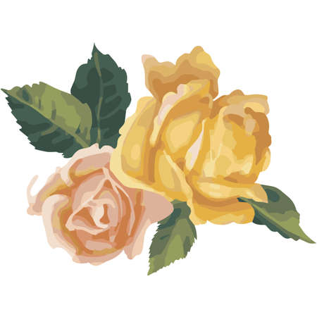 nature one painted: Watercolor hand drawn vector rose. Illustration