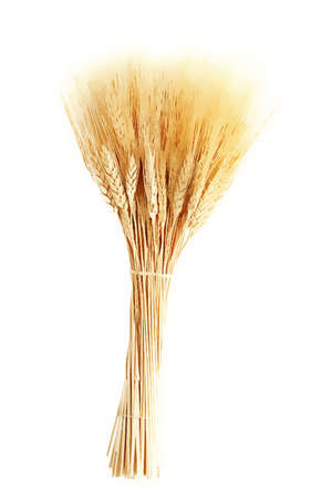 husk: Ears of wheat illustration hand drawn painted watercolor Stock Photo