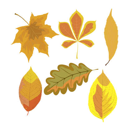 closer: autumn leaves set, isolated on white background. simple cartoon flat style, vector illustration.