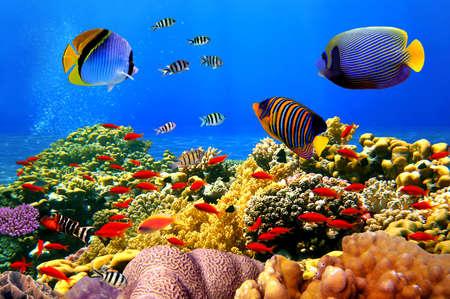 Meraviglioso e bellissimo mondo sottomarino con coralli e pesci tropicali. Archivio Fotografico - 66229287