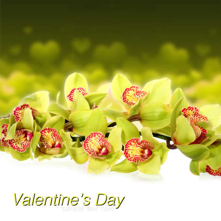A bouquet of beautiful, live Orchid isolated on a yellow background.
