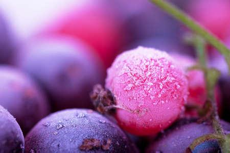 Macro view of frozen berries: blackcurrant, redcurrant, blueberry Stock Photo