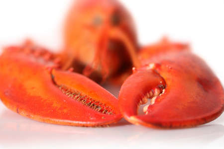 crawfish: Big Red lobster isolated on white background. Lobster isolated on a white background as fresh seafood or shellfish food concept as a complete red shell crustacean isolated on a white background.