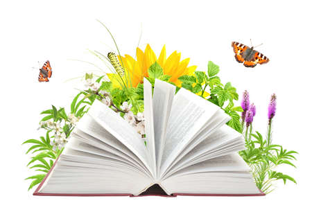 Open book and nature. Concept. Ecology. Knowledge. Education.