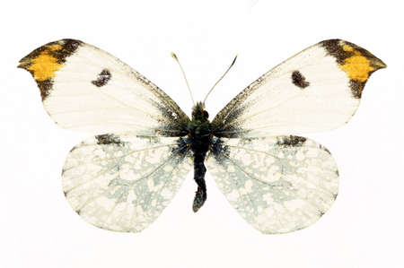 Butterfly isolated on a white background. Colour bright.
