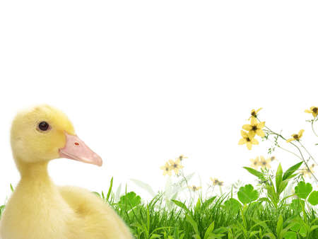 flappers: Flappers on Spring Meadow Foto de archivo