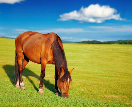 Beautiful horse jumps on green grass Stock Photo