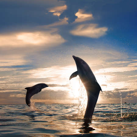 Leaping dolphin out of the water. Stock Photo