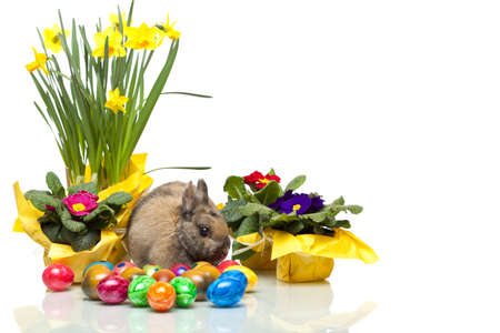 Easter Rabbit. Fluffy and cheerful. Celebration Stock Photo
