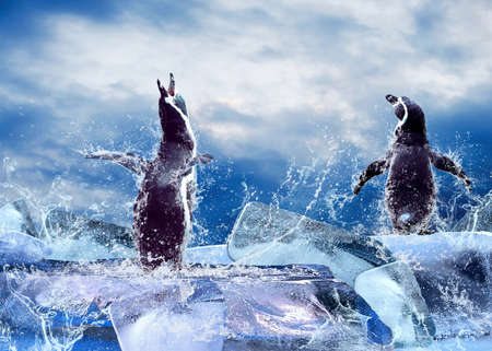 Penguin on the background of water