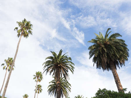 green palm trees and sky Stock Photo
