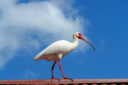 Ibis bird feather pink red nature landscape animal swamp forest pond