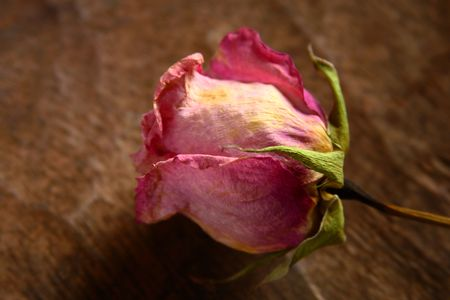 Dried rose on a wood background Stock Photo