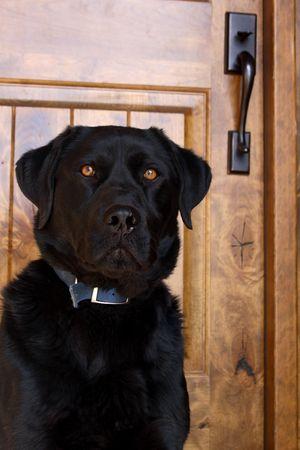 guard dog: Guard dog.