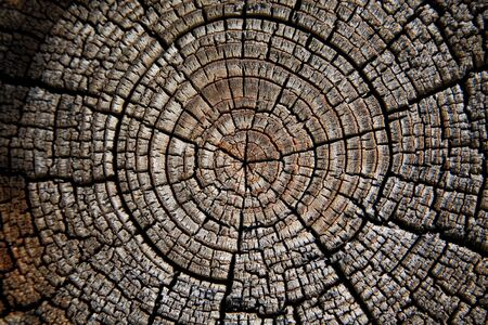 Detail on end of weathered log