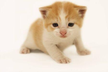 Orange Kitten Stock Photo