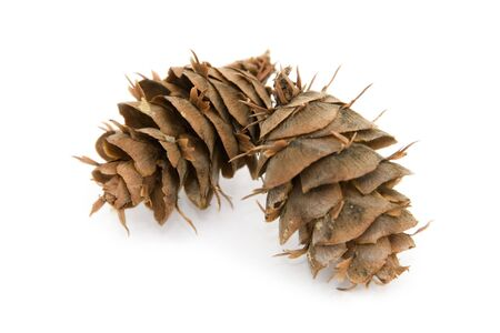 2 Douglas Fir Cones photo