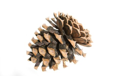 Pinecone isolated on a white background. Stock Photo
