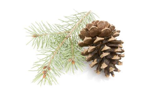 Pinecone and Needles