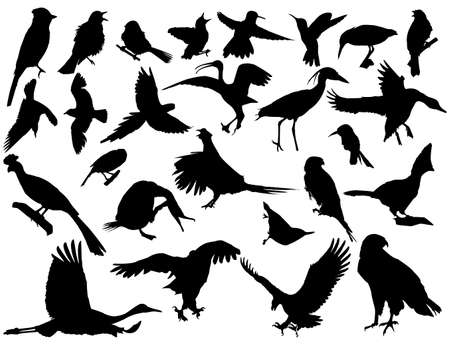 outline bird:  silhouettes of birds