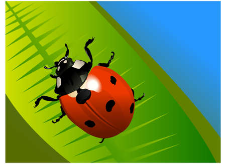 ladyfly: the colored ladybird on the leaf Illustration
