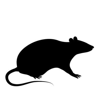 The black silhouette of a rat or mouse is sitting with a tail, paws and ears on a white background 向量圖像