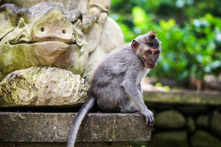 Monkey sitting on he statue Stock Photo