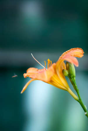 Flower on a green background and the insect flies it to him photo