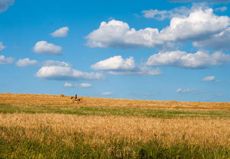 horse on the harvested field photo