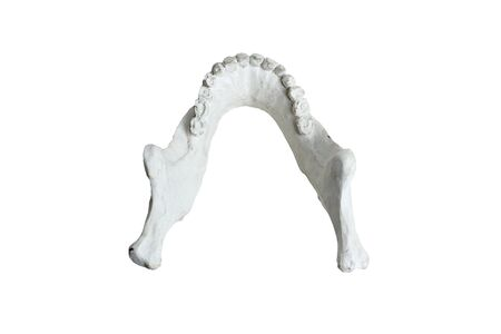 The lower jaw of a human skull made from plaster on a white background isolate