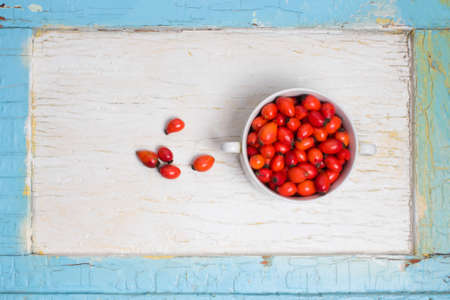 Freshly picked rose hips, commonly known as the dog rose, Rosa canina. in a blue old wooden frame against a cracked white painted Board